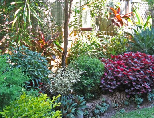 Two For One — Shrubs as Garden Accents