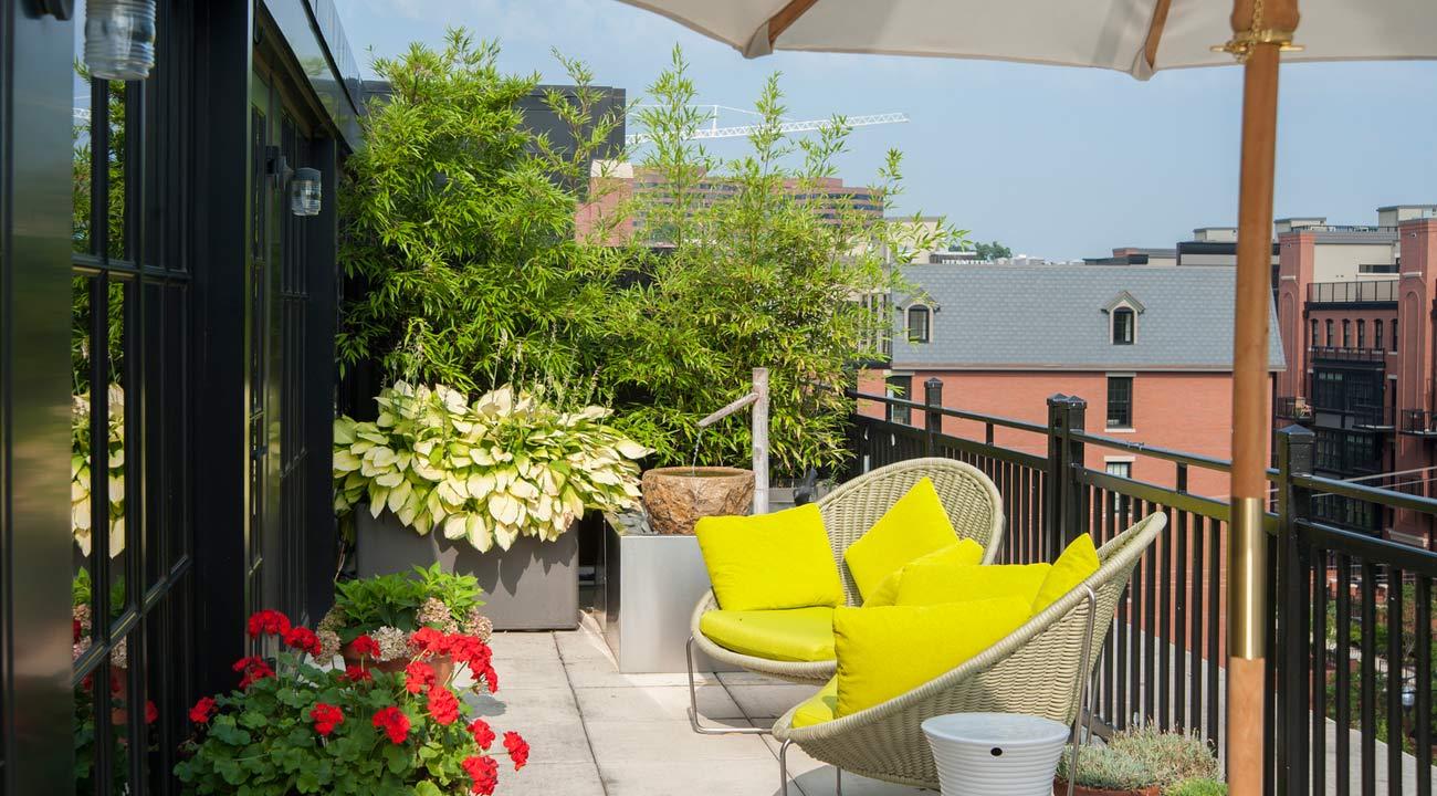 roof_terrace_garden_arlington_01