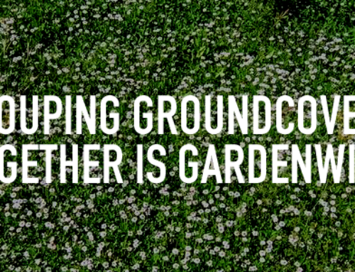 Grouping Groundcovers Together is GardenWise