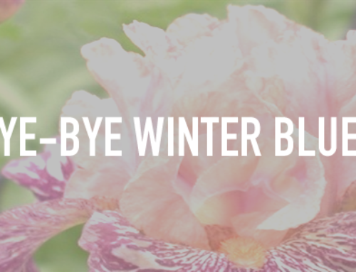 Bye-Bye Winter Blues!